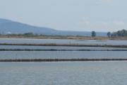 Атанасовското езеро – находка за природолюбители на метри от цивилизацията