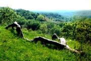 Силкосия – най-старият резерват в България
