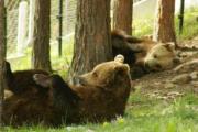 Паркът за танцуващи мечки в Белица – спасителен пристан за големите хищници и любопитно място за посетителите