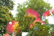Албена - цветна екзотика и в летните жеги