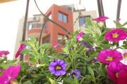 Fantasy Apartments – зелена морска почивка с... катерички и таралежи